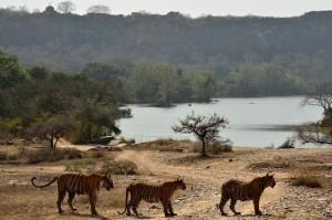 Ranthambore Tourism