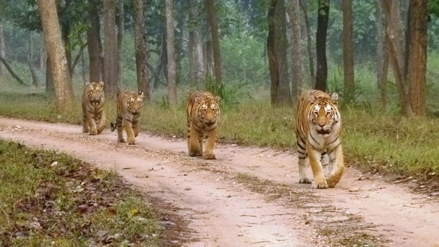 Pench Tourism