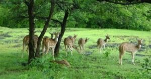 Indravati National Park